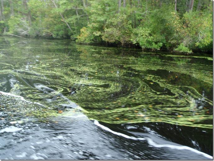 Dismal Swamp Canal Albin Vega Sailboat Velocir